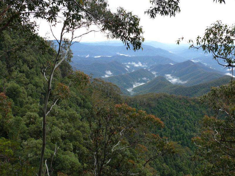 Gondwana rainforests of australia world heritage for Australian rainforest